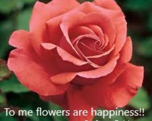 Flowers Quotes About Everything Flowersandflowerthings