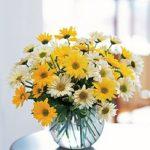 daisies flower arrangement