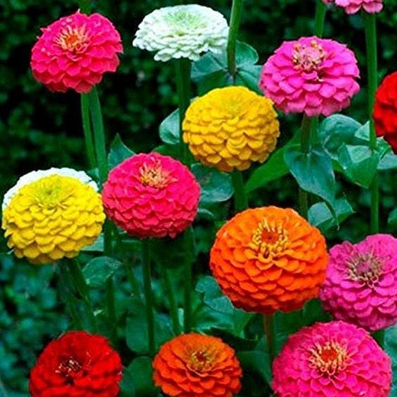 Fastest growing flower seeds for science project