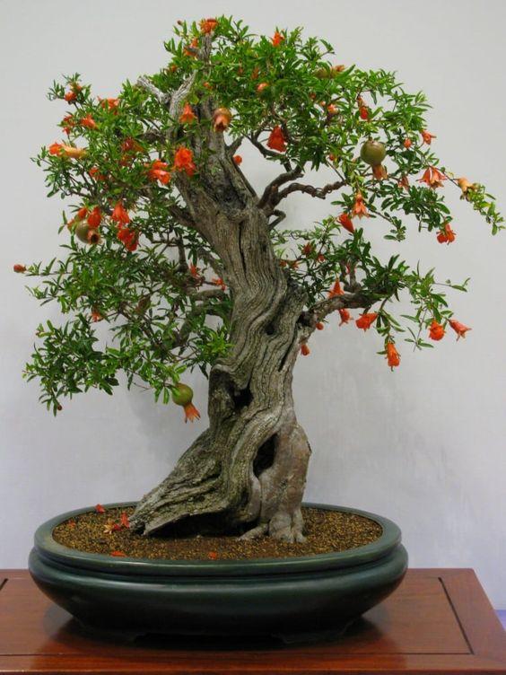 Best Bonsai trees