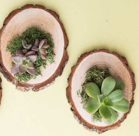 wood succulent favors