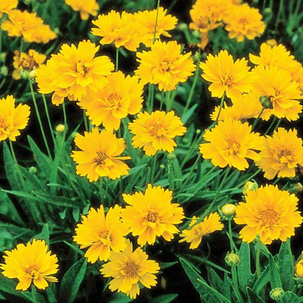 Perennial flowers list with perennial shrubs and perennials for full sun and shade
