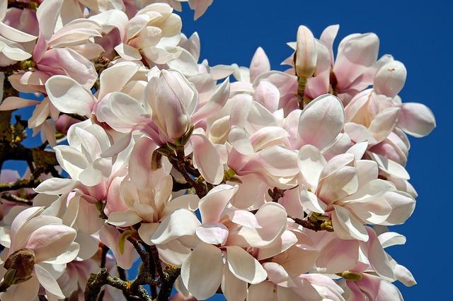 Flower Meaning Perseverance Flowersandflowerthings