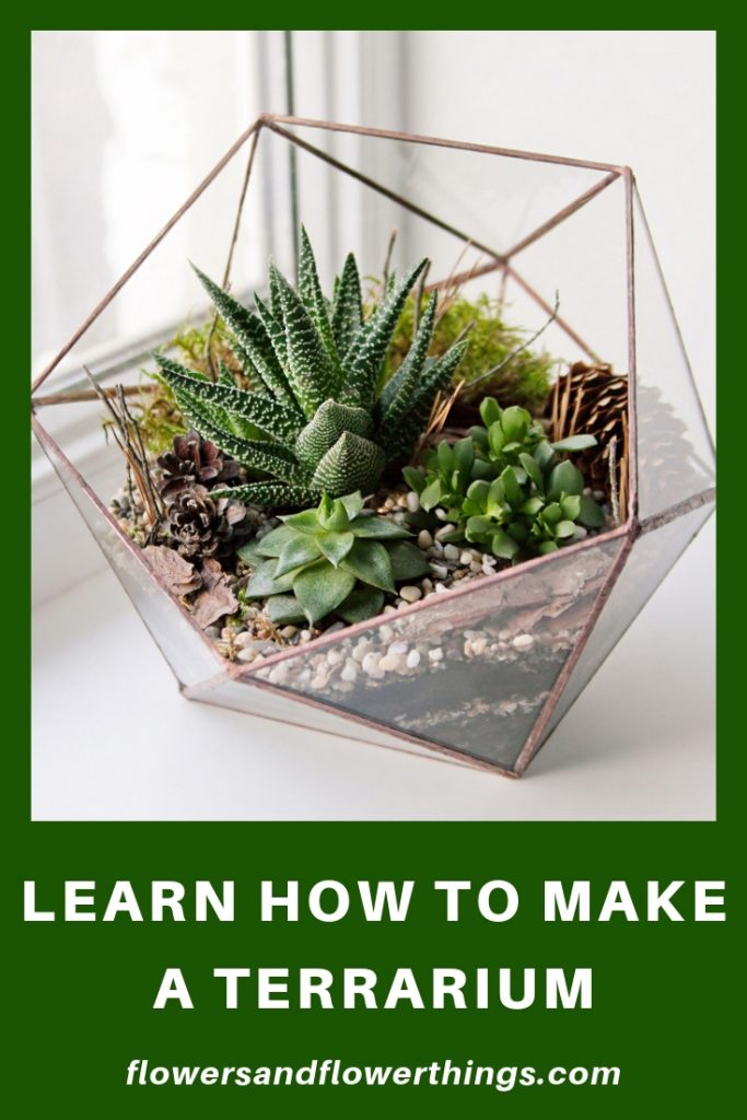 DIY Succulent terrariums Ideas