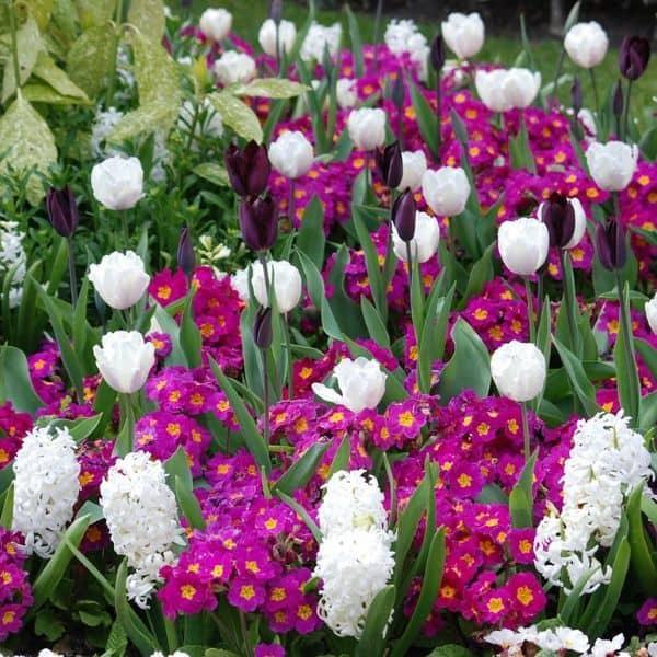 growing organic flowers
