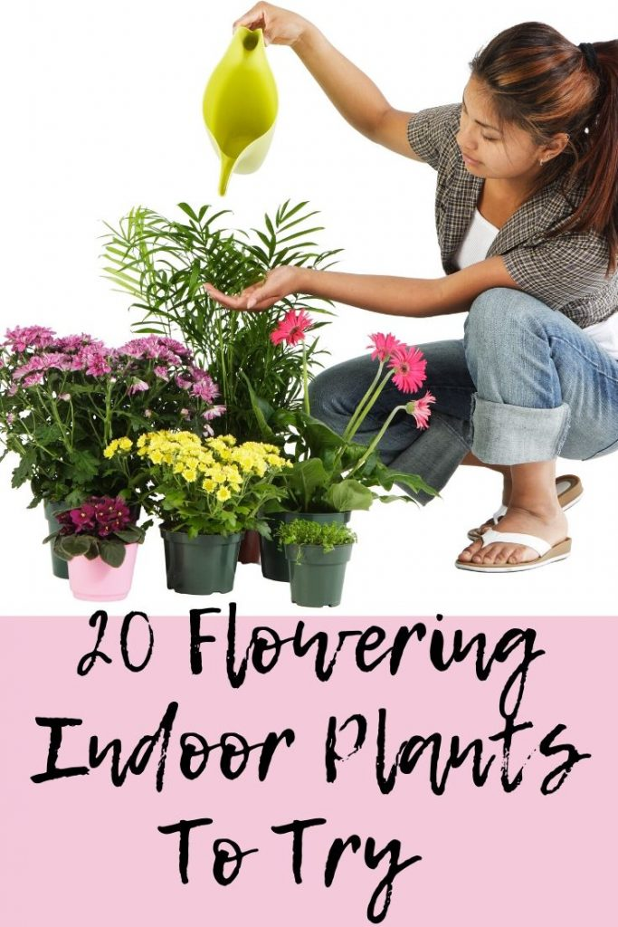 flowering indoor plants that are easy to keep alive