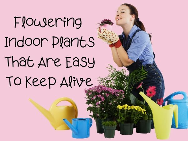 25 Flowering Indoor Plants That Are Easy to Keep Alive