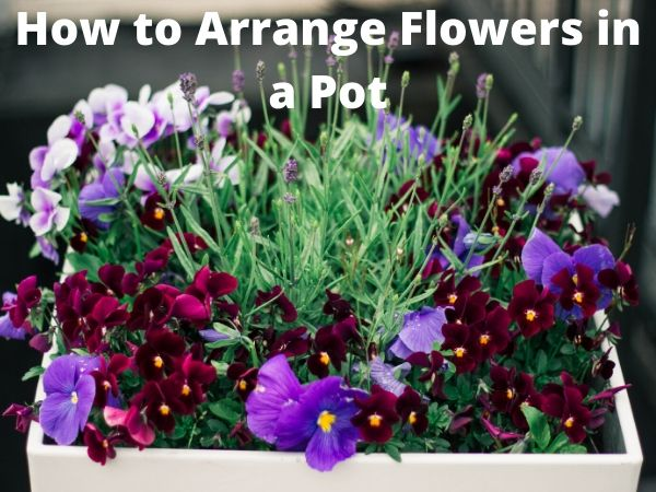 How to Arrange Flowers in a Pot?