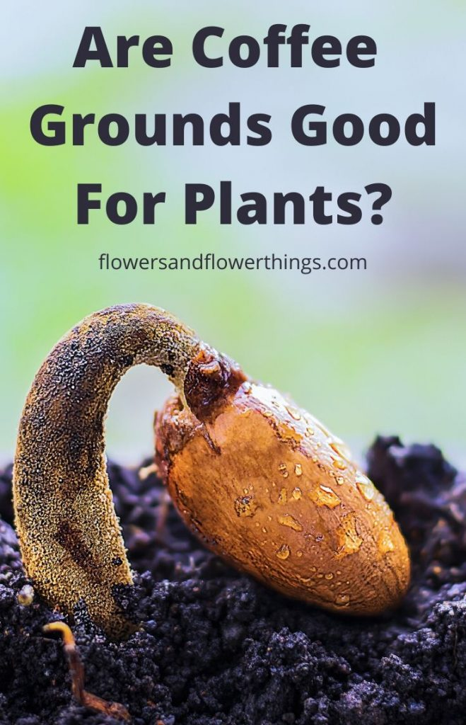 Are Coffee Grounds Good for Plants and flowers