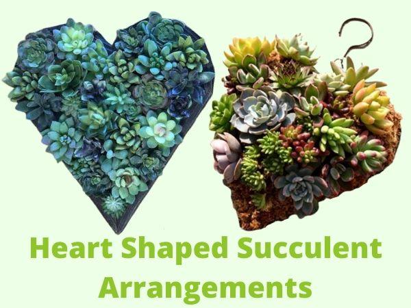 DIY Heart-shaped succulent planter arrangements