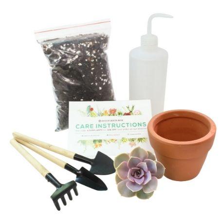 Succulent beginner kit