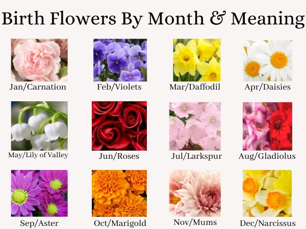 Birth Flowers by Month and Meaning