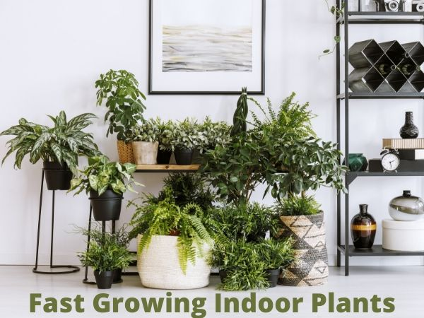 30 Fast-Growing Indoor Plants