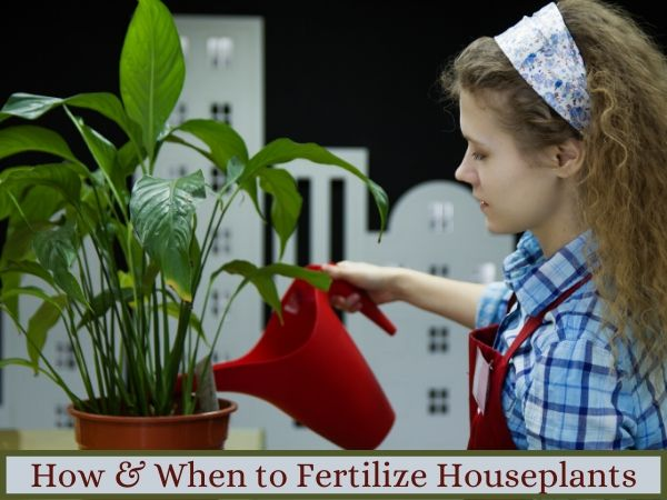 How and When to Fertilize Indoor Plants
