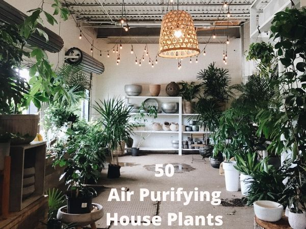 50 Air Purifying House Plants by NASA