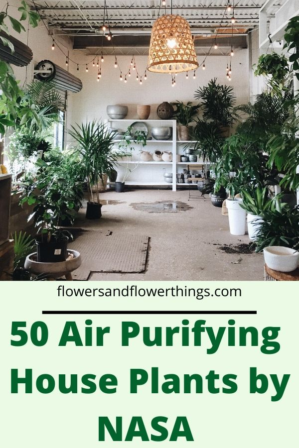 Air Purifying House Plants by NASA indoor plants