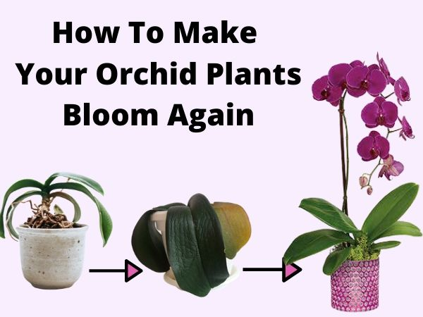 How to make Orchids Bloom Again