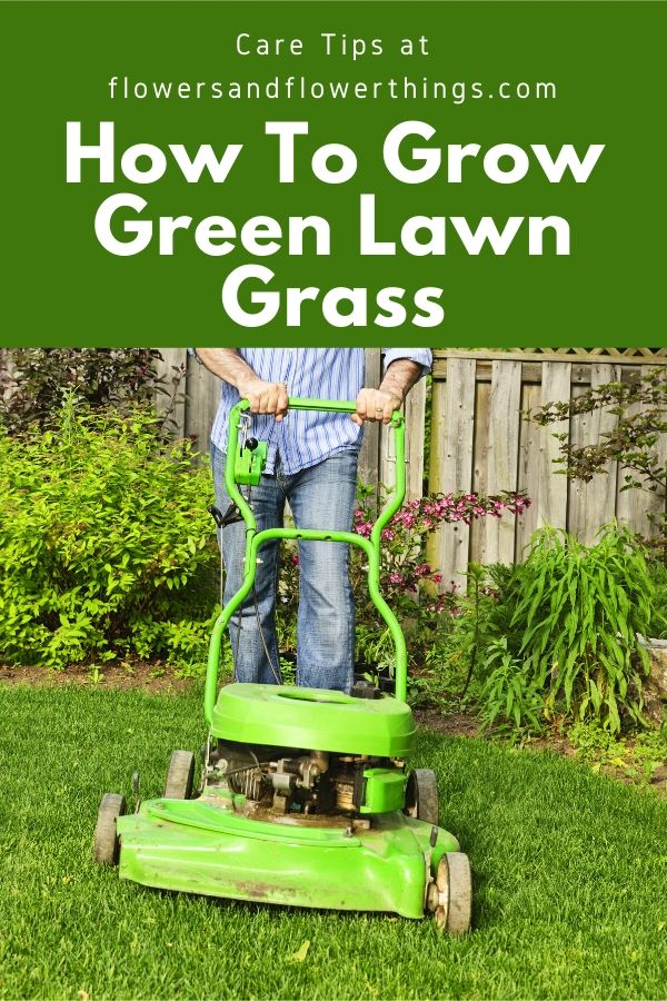 How to Grow green lawn grass and care tips