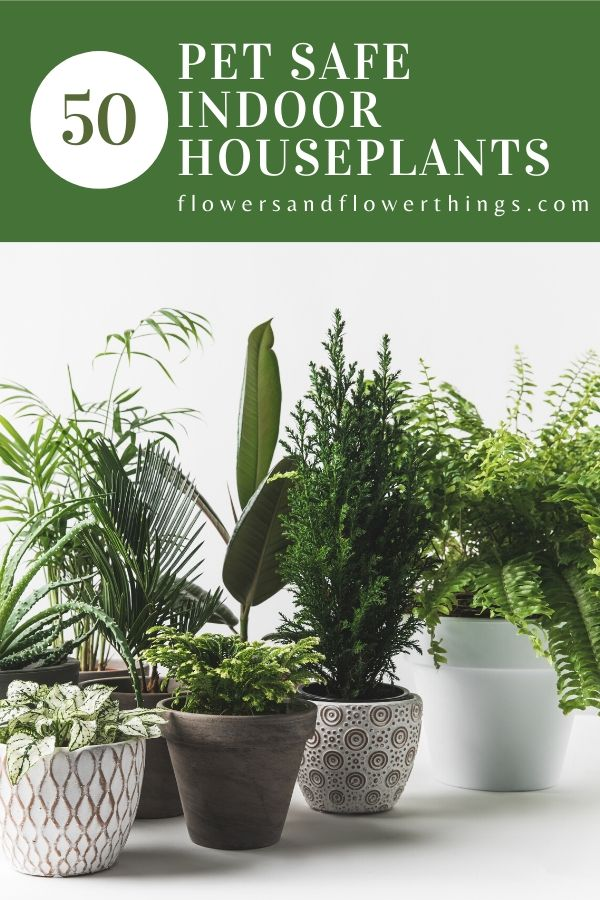 50 Pet Safe Indoor Houseplants for cats and dogs