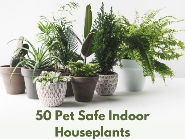 50 Pet Safe Indoor Houseplants
