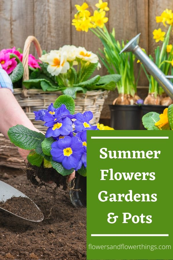 Summer Flowers for Gardens Pots