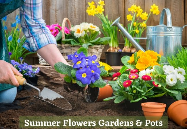 Summer Flowers for Gardens and Pots