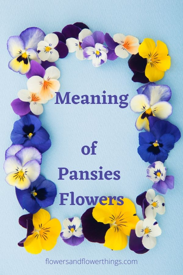 meaning of pansies flowers and symbolism