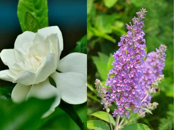 12 Best Fragrant Plants
