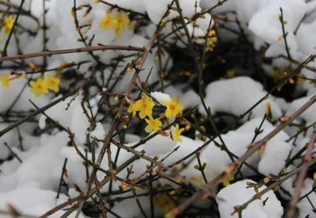 best outdoor winter flowers