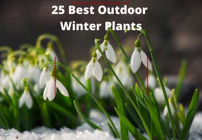 25 Best Outdoor Winter Plants
