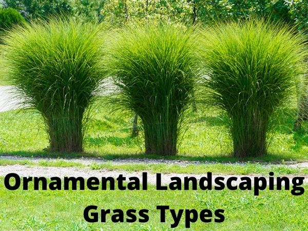 Ornamental landscaping Grass Types