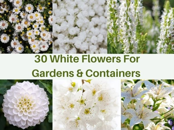 30 White Flowers for Gardens and Containers