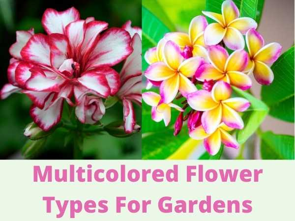 30 Multicolored Flowers for Gardens and Pots