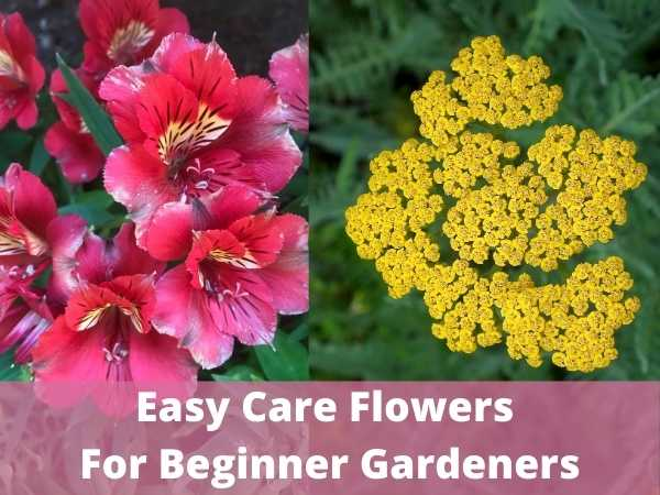 Easy Care Flowers For Beginner Gardeners