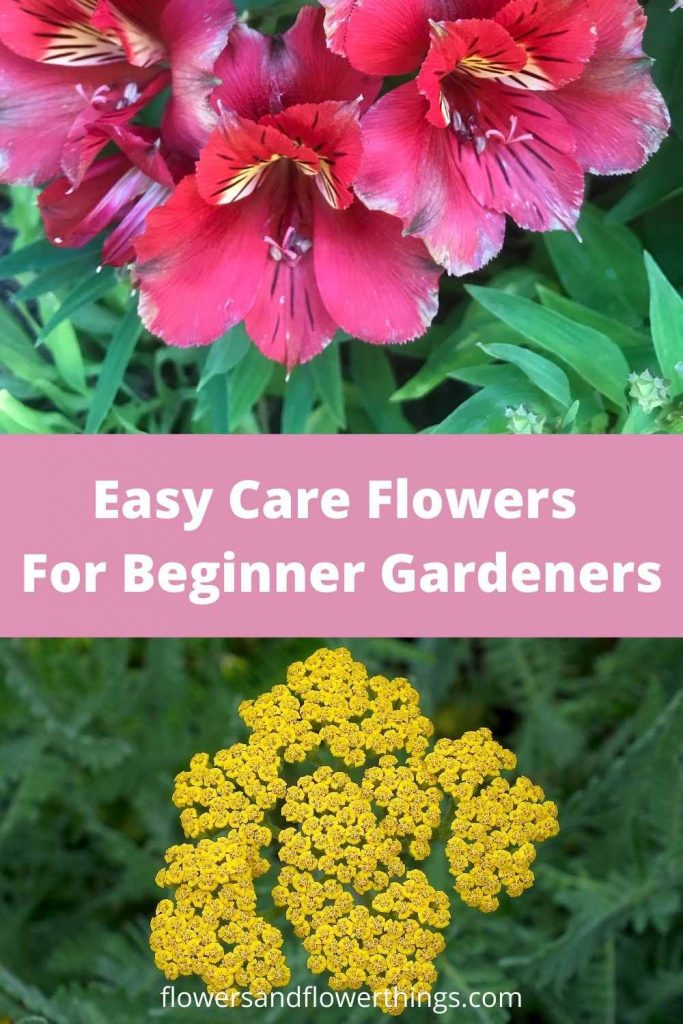 Pretty Easy Care Flowers For Beginner Gardeners