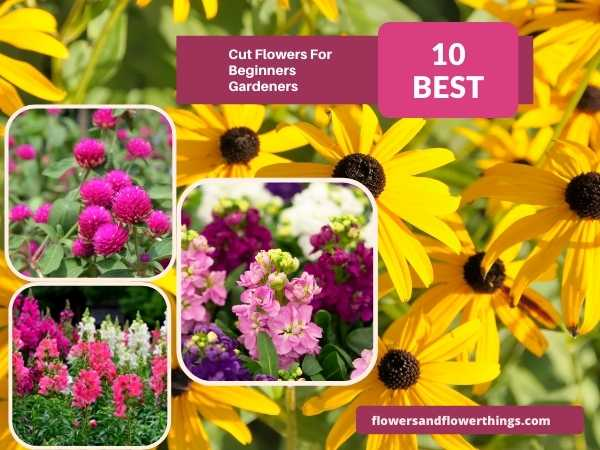 Beautiful Cut Flowers For Beginner Gardeners