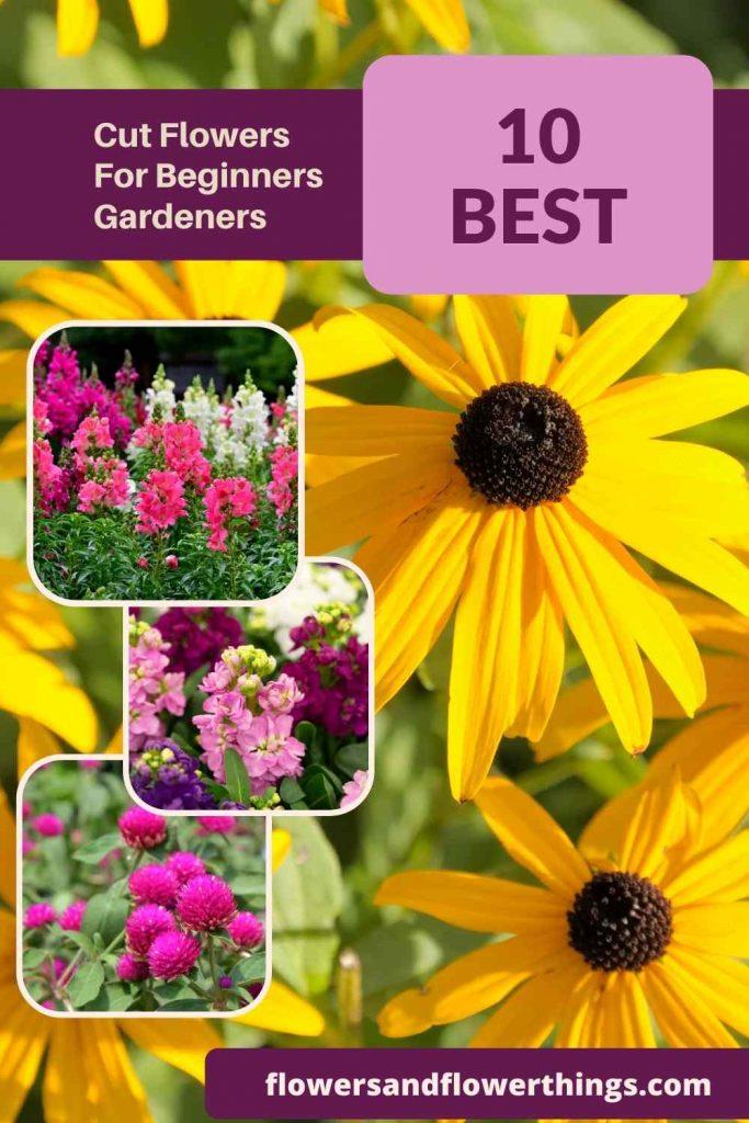 pretty cut flowers for beginner gardeners