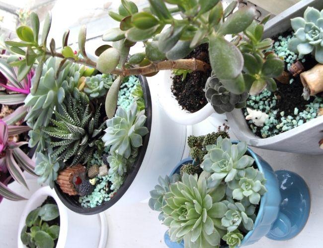 Best Indoor Succulents for Low Light Rooms